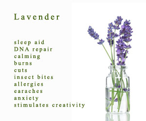 Free Lavender Essential oil